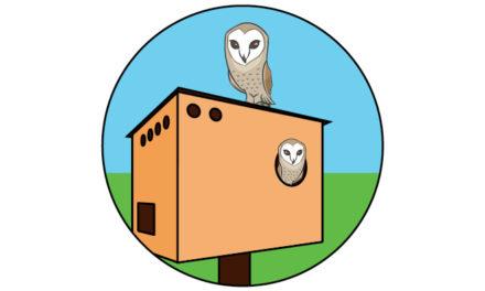 Build an Owl Box