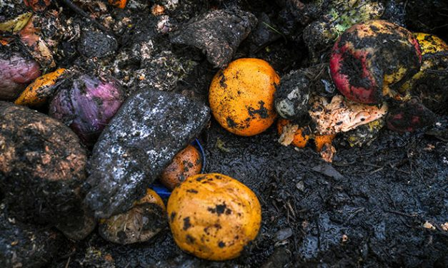 Why Is One-Third of Our Food Wasted Worldwide?