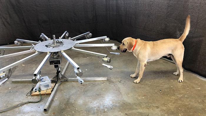 Dog smell training wheel