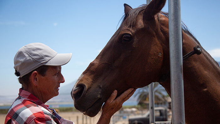 Dawn Stephens and horse