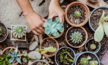 6 Tips for Caring for Succulents