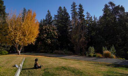5 Steps to Start Meditating