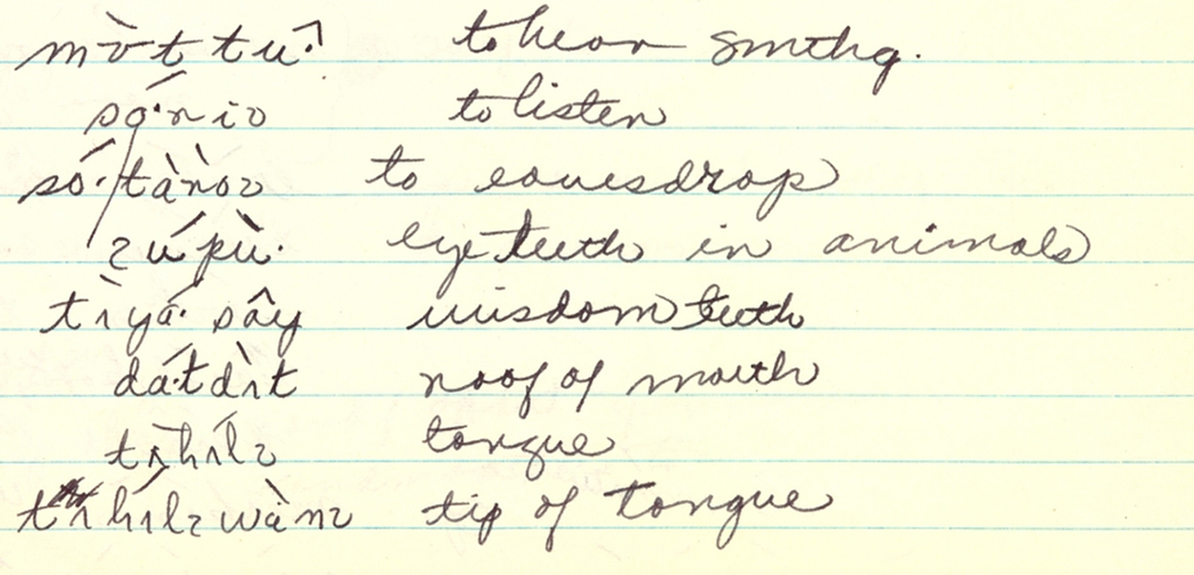 """In writing """"A Grammar of Patwin,"""" Lawyer compiled information found in archives across the country, like these 1952 notes from the Elizabeth Bright Papers on the Patwin Language, at the Survey for California and other Indian Languages, UC Berkeley."""