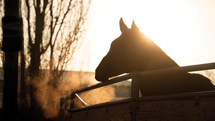 Horse on campus at sunrise