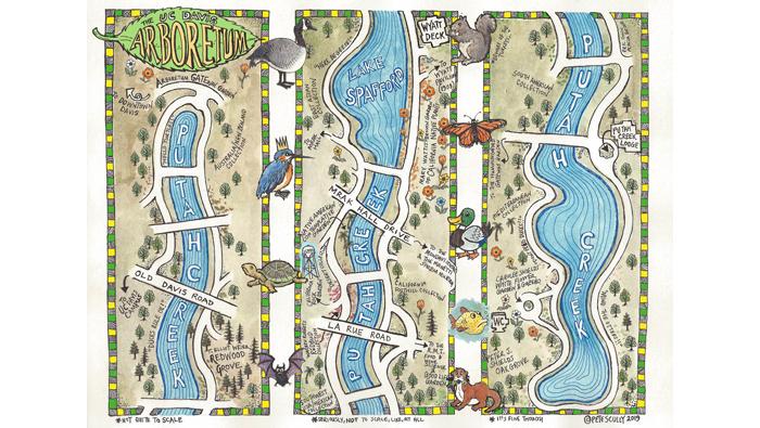 Color illustration of the UC Davis Arboretum map