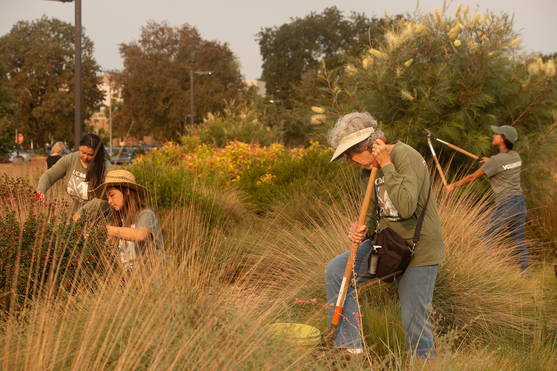 Rachel Davis of the Arboretum work with student intern Elizabeth Hursch, volunteer Jessica Colvin and volunteer Judy Hecomovich in the humminbird garden on August 12. 2021.