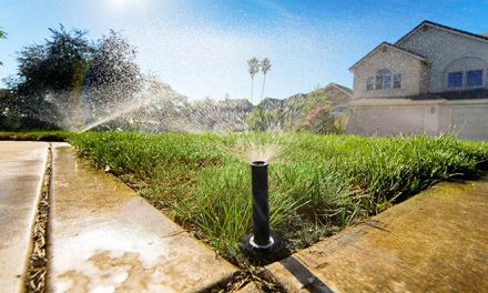 6 Tips for Saving Water