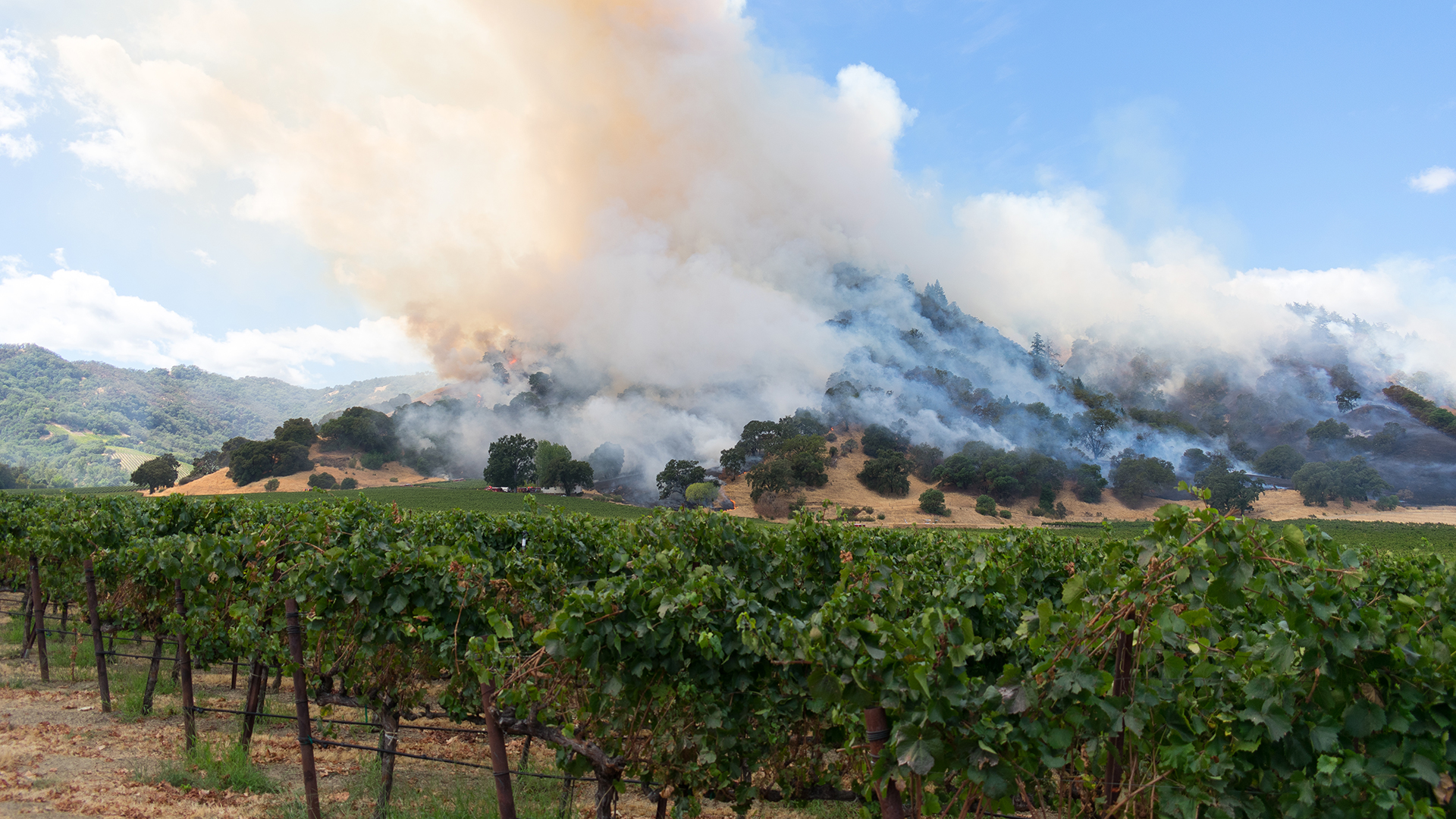 Vineyards with smoke in the distance